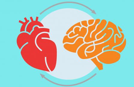 A cartoon heart and brain depicted next to one another, with an arcing arrow pointing from the heart to the brain, and another arrow from the brain to the heart